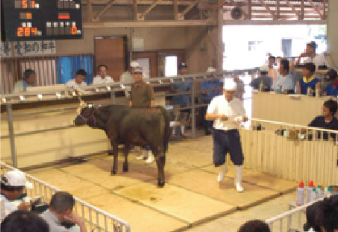 新城家畜市場